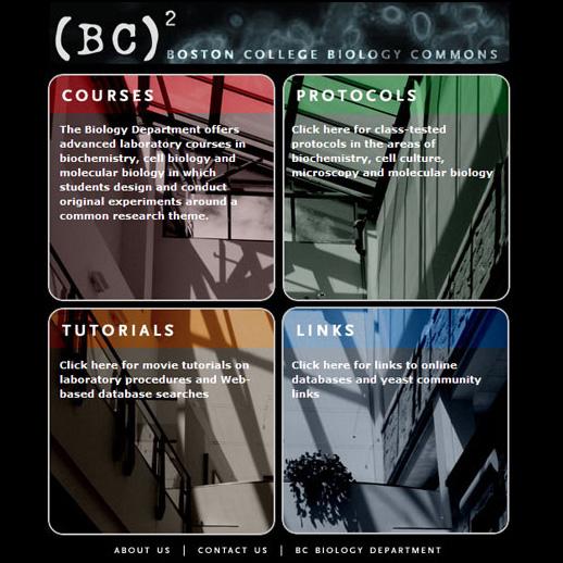 Web & Interactive Media Design